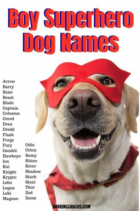 The Best Boy Dog Names List With Meanings Boy Dog Names Dog