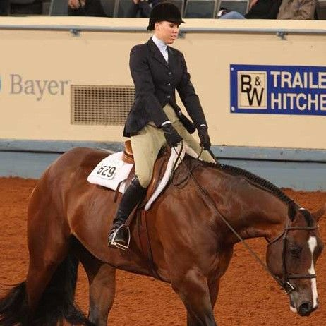 Get some horse-training tips to improve your horse's performance in hunter under saddle class. After learning about common issues that can affect the body carriage of your hunter under saddle horse ...