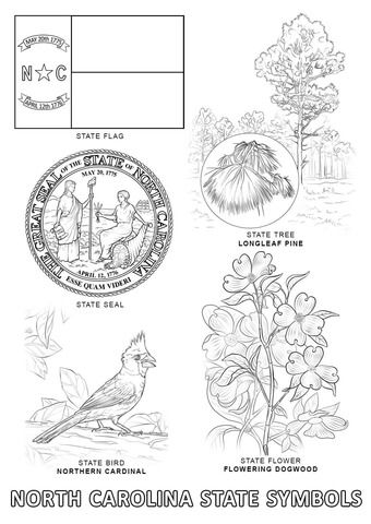 North Carolina State Symbols Coloring Page Flag Coloring Pages