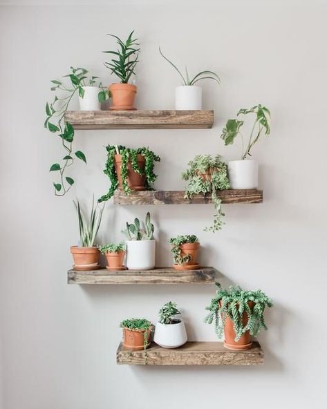 Timber Edge Floating Shelves Lively up your space with our TIMBER EDGE floating shelves. For storage or display, these rustic shelves are sure to bring the great out doors into your home. Shelves are hand crafted from carefully selected Diy Hanging Shelves, Floating Shelves Diy, Plants On Shelves, Rustic Shelves, Indoor Plant Shelves, Decorative Shelves, Wall Of Plants Indoor, Garden Shelves, Hanging Plants