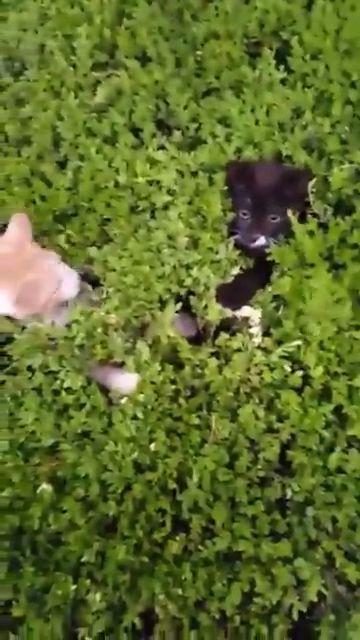 danger bush! - #bush #Danger