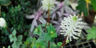 Pin Di Tanaman Bunga