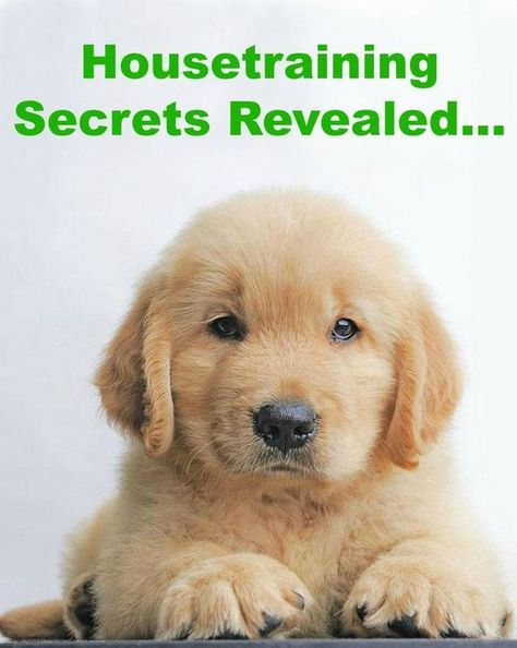Learn Secrets To Dog Training Read More Training And Hands On
