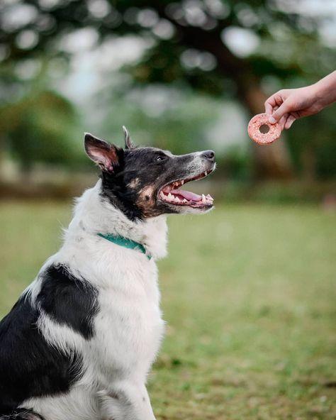🐶 𝐆𝐞𝐭 𝐭𝐡𝐞 𝐂𝐮𝐭𝐞𝐬𝐭 𝐁𝐨𝐫𝐝𝐞𝐫 𝐂𝐨𝐥𝐥𝐢𝐞 𝐃𝐨𝐠 𝐓𝐚𝐠𝐬 𝐢𝐧 𝐋𝐞𝐩𝐞𝐭𝐨! 🎁 #explorewithdogs #dogsofbark #hikingdogsofinstagram #dogsrule #dogsthathike #outdoordogs #ukdogs #dogscorner #dogsdaily #dogsofinstaworld #dogsthatexplore #nikonuk #photography #dogphotography #dogs  #dogsinwilderness #adventuredog #adventureseeker #bordercollie #animalphotographer #amongthewild #wiggleauss20 #pawpartyshellojune #puppiesofinstagram #photographylovers #collie #dslrphotography #dogslife
