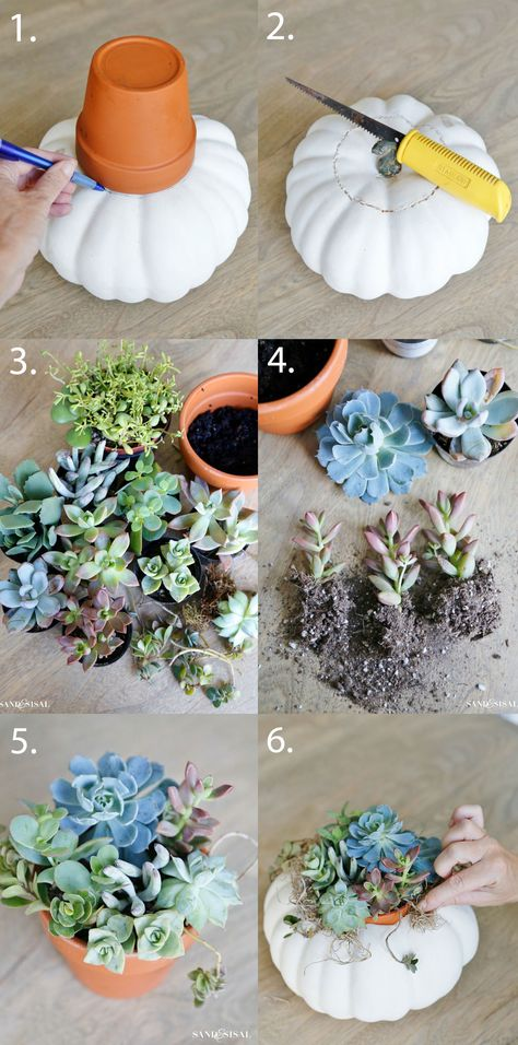 DIY's and How-To's DIY Succulent Pumpkin Centerpiece This text options info on ten flowering panoram Succulent Centerpieces, Fall Wedding Centerpieces, Pumpkin Centerpieces, Succulents Diy, Flower Centerpieces, Pumpkin Arrangements, Indoor Succulents, Succulent Planters, Succulent Arrangements