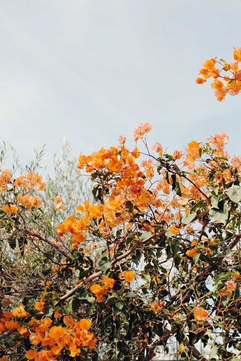 nature photography Bougainvillea on Crete by Ulrika Ekblom Photography Orange Aesthetic, Nature Aesthetic, Flower Aesthetic, Aesthetic Collage, Collage Des Photos, Photo Wall Collage, Picture Wall, Aesthetic Backgrounds, Aesthetic Iphone Wallpaper