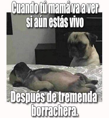 Pin By Lesbi Torres On Lesbi Torres Memes Humor Dogs