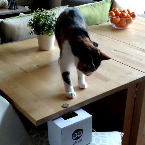 Bobine aussi a souhaité nous aider pour notre campagne ❤ #crowdfunding #cat #instacat #ulule #cute #solidarity #madeinfrance #bloupcoussins #faitmain #love #surmesure #contribution