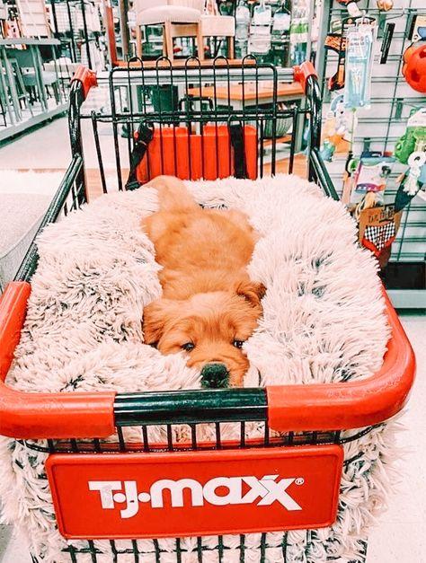 Baby Animals Super Cute, Super Cute Puppies, Cute Little Puppies, Cute Little Animals, Cute Dogs And Puppies, Cute Funny Animals, Funny Dogs, Doggies, Cute Puppy Pics