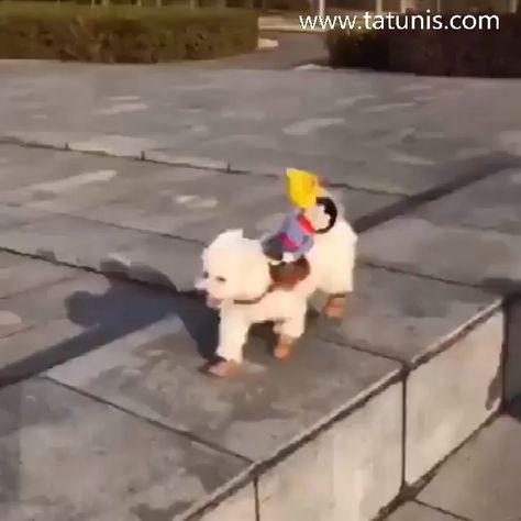 Ride Cowboy Dog Pet Costume(BUY 1 GET 2ND 10% OFF)