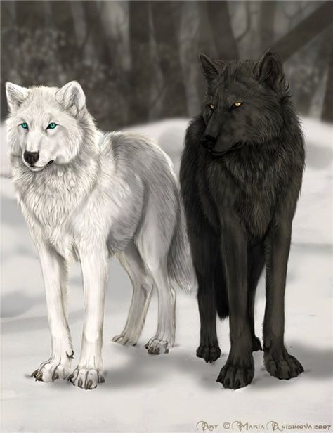 black wolf with white wolf - Google Search