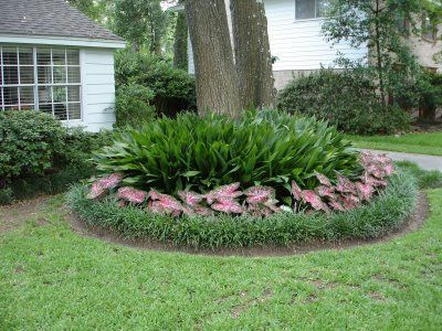 cast iron plants caladiums and liriope around the base of a tree try something like this around the elm archyvas pinterest iron plants and - Garden Ideas Under Trees