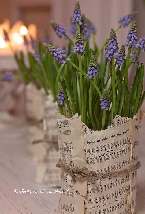 DIY gift idea - wrapping up plants / flowers using copies of sheet mustic.     The ROSEGARDEN in Malevik~wrapping plants with sheet music