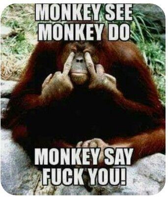 Pin By Alina Elina On Let S Smile Monkeys Funny Monkey See Monkey Do Funny Quotes