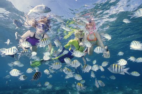 """Pompano Beach is truly """"nature's aquarium"""" with some of the best diving and snorkeling in the nation."""
