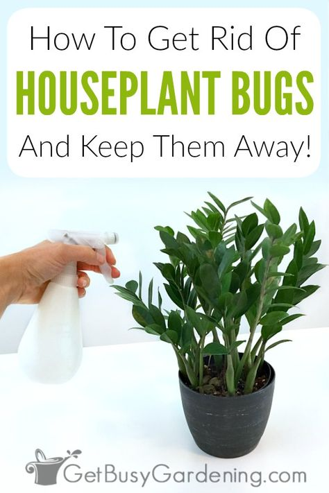 How To Get Rid Of Houseplant Bugs Naturally