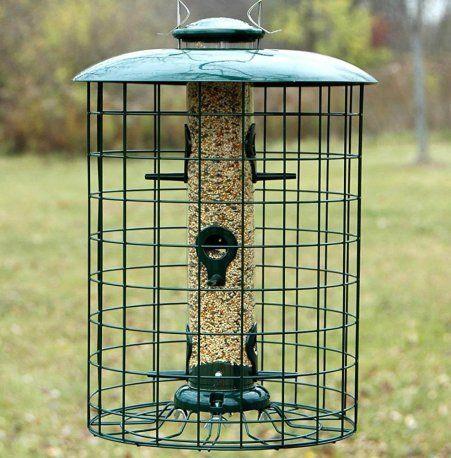 3 Proven Ways To Get Rid Of Starlings Today Bird Watching Hq Best Bird Feeders Bird Feeders Hanging Bird Feeders