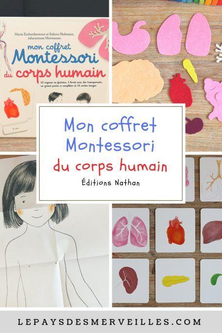 Mon Coffret Montessori Du Corps Humain Organes Corps Humain Corps Humain Activites Du Corps Humain