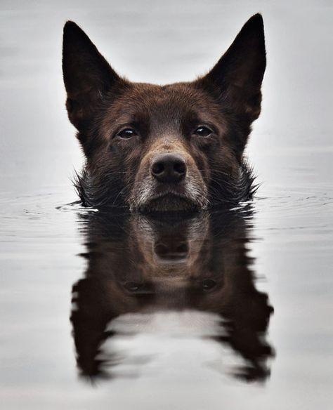 Ukrainian Photographer Sergey Polyushko Shoots Captivating Animal - Ukrainian photographer sergey polyushko shoots captivating animal portraits