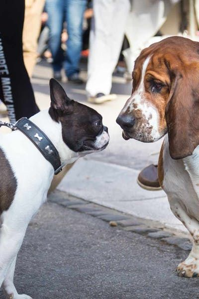 How To Train Your Dog To Greet Other Dogs Service Dog Training