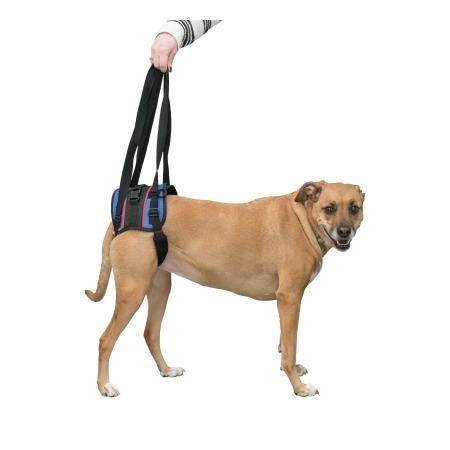 Walkin Lift Combo Rear Mobility Harness Wheelchair Sizes Pet Gifts Harness