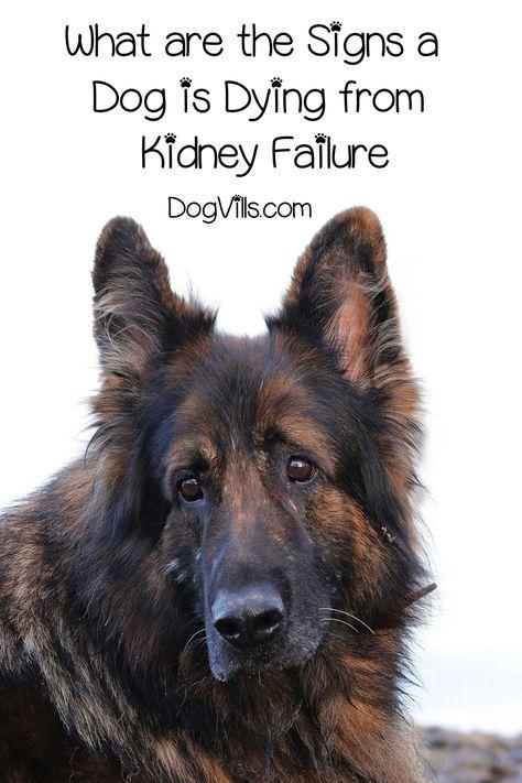 10 Pet Health Ideas Pet Health Pets Dogs