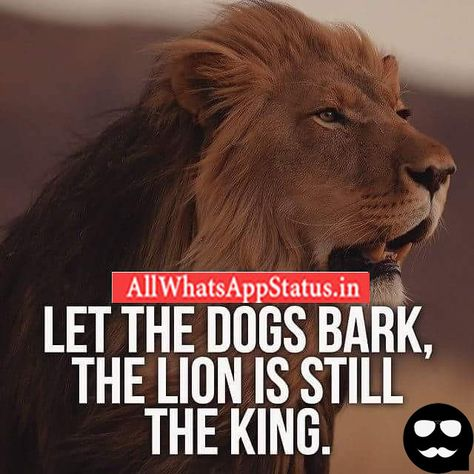 Cool Status For Whatsapp In English Lion Quotes Quotes