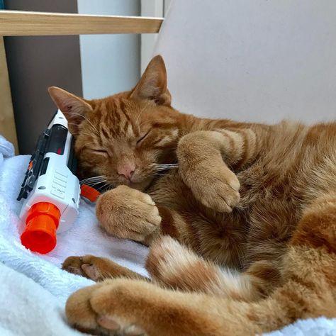 catseyes Cat Toys . . . . . #petstoreo...