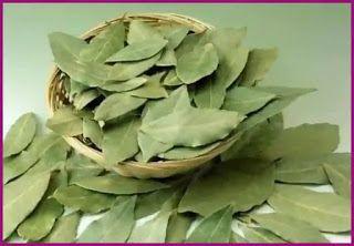 فوائد ورق الغار في الاعشاب والطب النبوي Succulents Artichoke