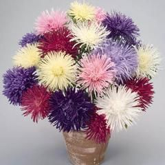 Buy The Highest Quality Flower Seeds Trusted Supplier Since 1879 Harris Seeds Flower Seeds Flower Seeds Online Aster Flower