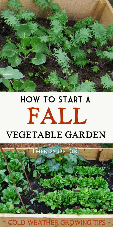 Gardening For Beginners Vegetable growing does not have to stop at the end of summer. There are many veggies you can grow in the fall (and winter) in cold climates. In fact, many food crops do better in cold weather. Come see what you need to get started. Vegetable Garden For Beginners, Veg Garden, Edible Garden, Gardening For Beginners, Garden Plants, Gardening Tips, Garden Boxes, Balcony Gardening, Garden Kids