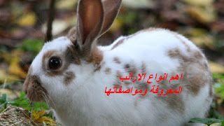 المهندس الزراعي اهم انواع الارانب المعروفة ومواصفاتها Animals Rabbit
