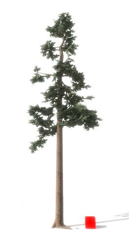 Scots Pine Tree 3d Trees Unity Asset Store Pine Tree Pine Tree Tattoo Pine Tattoo
