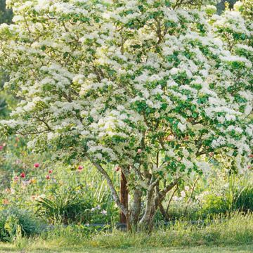 18 Small Trees That Will Add Tons Of Color To Your Landscape Small Trees Flowering Trees Deciduous Trees