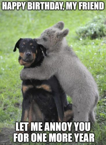 200 Laughs With Images Animals Friendship