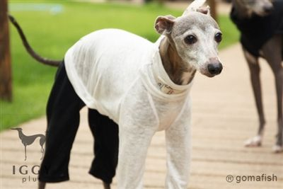 100 Linen Rompers White Gomafish Italian Greyhound Puppies Italian Greyhound Clothes Dog Modeling