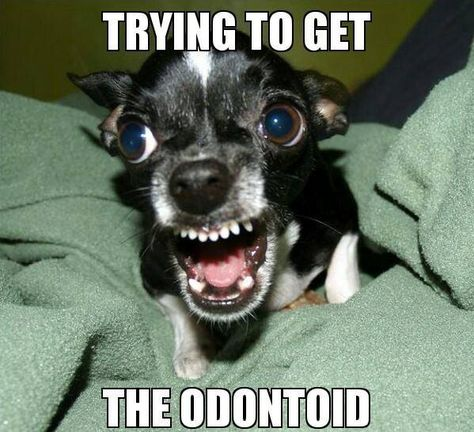 Trying to get the odontoid!! LOL