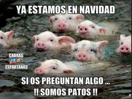 40 Ideas Memes En Espanol Chistosos Navidad For 2019 Funny Memes New Memes Memes Funny Faces