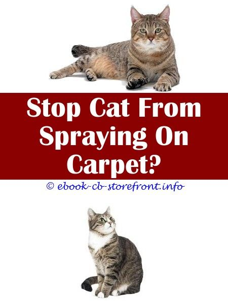 5 Awesome Unique Ideas Why Do Female Cats Spray Humans Cat