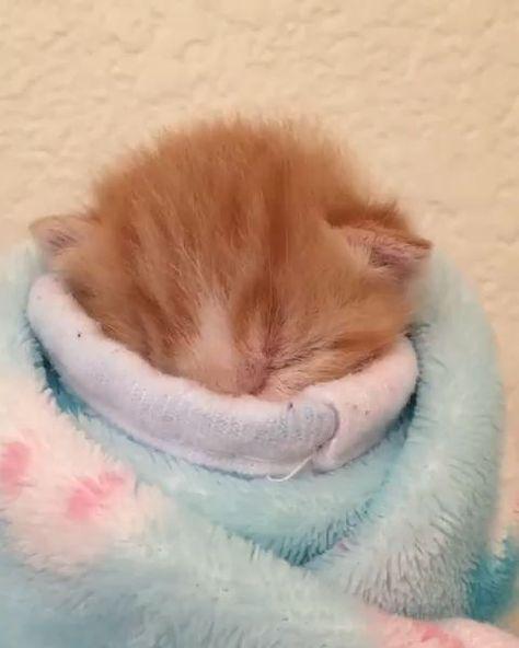 Feel better soon lil ginger cutie 💙🐾 #Baxterisacutie😻😍💙🐾 #totalcutiepie😻🐾💙, #Baxterisacutie #Cutie #feel #ginger #lil #totalcutiepie