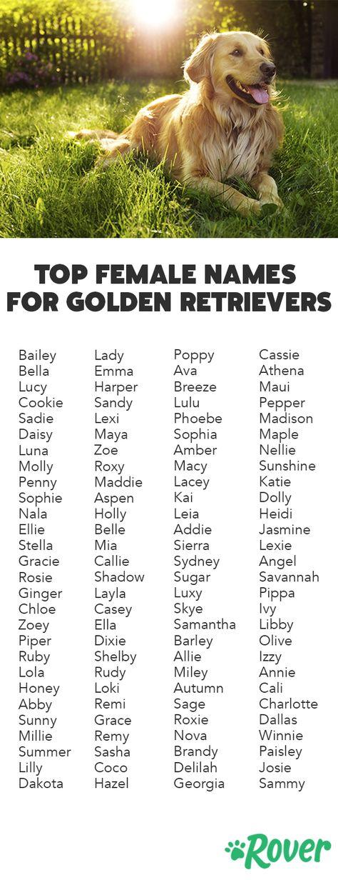 List of Pinterest golden retriever puppy names girls