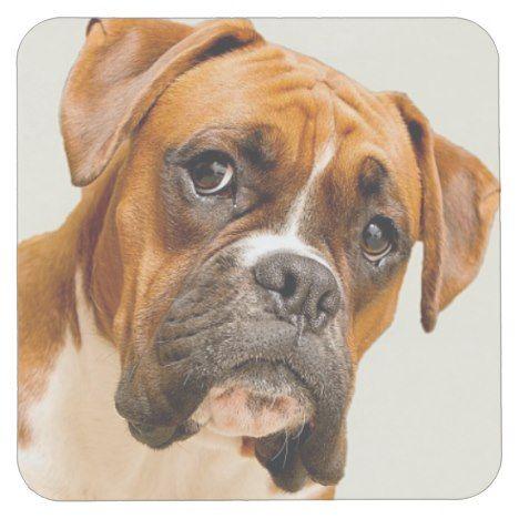 Boxer Puppy On Ivory Cream Backdrop Square Paper Coaster Zazzle Com Boxer Puppy Boxer Puppies Paper Coaster