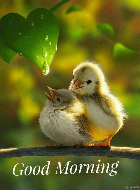 Goodmorning Facebook family have a Wonderful Sunday.:)