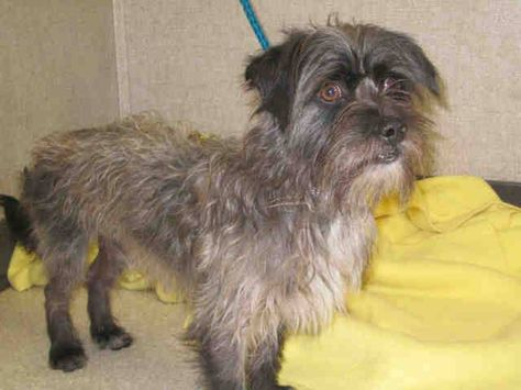 ZERO SHARES!!! WILEY  A1326700   Sex: N  Age: 2 Years  Color: GRAY - BLACK   Breed: CAIRN TERRIER - MIX   Kennel: 260   Intake: 6/3/14  OC Animal Care. 561 The City Drive South, Orange, CA. 92868 Telephone: 714.935.6848  https://www.facebook.com/photo.php?fbid=10154252642170223set=a.10151287465740223.802367.315830505222type=3theater