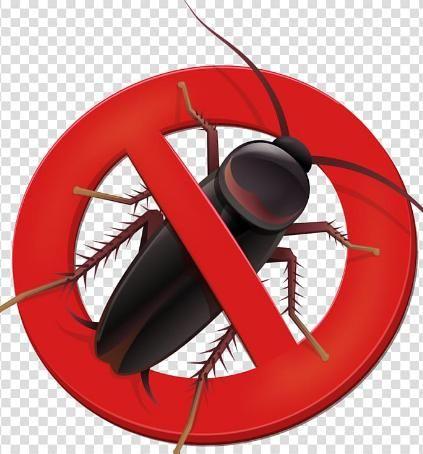 شركة مكافحة الصراصير بالطائف Pest Control Wok Kitchen