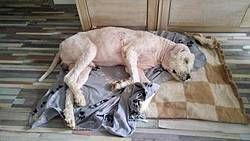 Tiere In Not Seite Hunde Aus Rumanien Dog Love Animals Second Chances Love