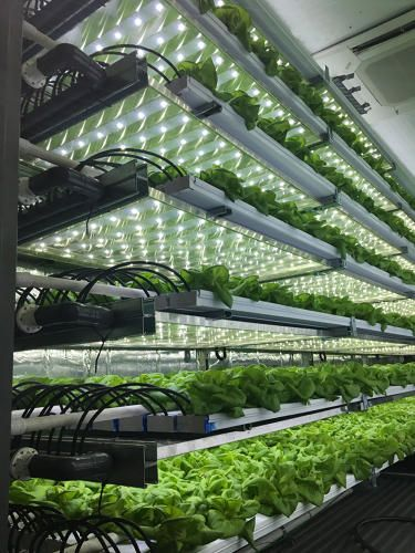 tour shows the details of the tiny farms from the irrigation system to lettuce at various stages of growth.