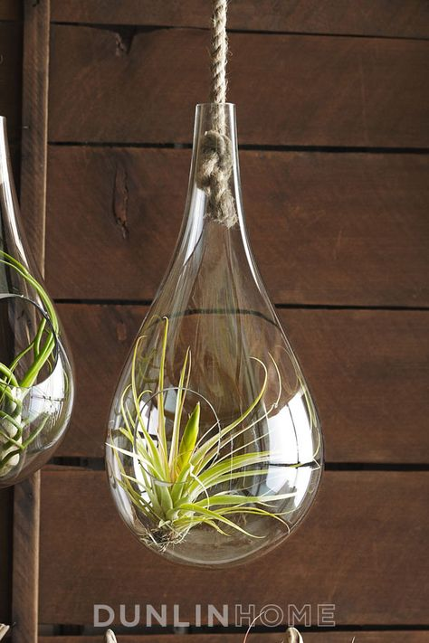 Hand Blown Glass Hanging Terrarium With Sisal Rope Your Pinterest