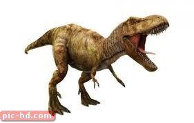 صور الديناصور معلومات وابحاث عن الديناصورات Tyrannosaurus Tyrannosaurus Rex Dinosaur