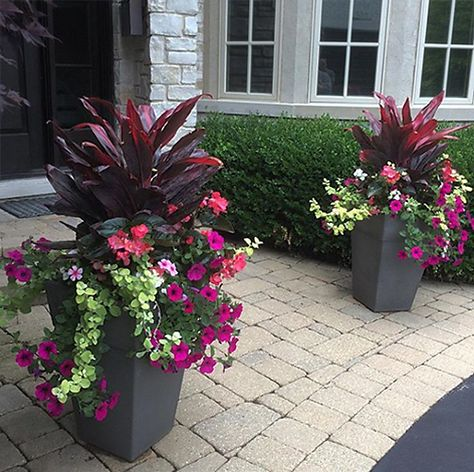 Plant Parenting - Summer outdoor planters and container gard.- Plant Parenting – Summer outdoor planters and container gardens Plant Parenting – Summer outdoor planters and container gardens - Potted Plants Patio, Outdoor Planters, Tall Planters, Plants Indoor, Outdoor Gardens, Front Porch Flowers, Planters For Front Porch, Planters Around Pool, Full Sun Planters